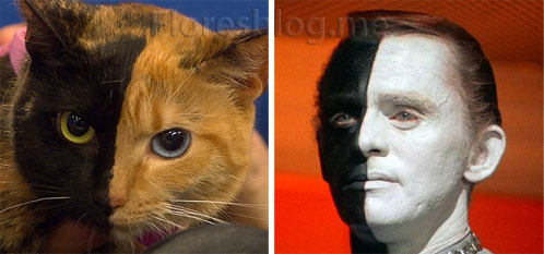 Venus the two-faced chimera cat totally looks like frank gorshin as bele from star trek episode let that be your last battlefield